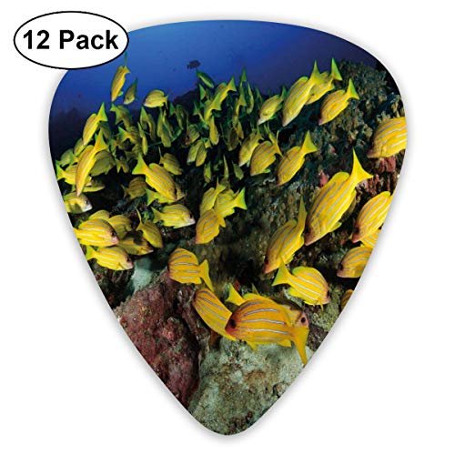 Celluloid Guitar Picks - 12 Pack,Abstract Art Colorful Designs,Tropical Fish On A Coral Reef Hawaiian Ocean Floor Environment Animals In World,For Bass Electric & Acoustic Guitars.