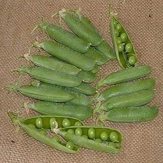 SeeKay Pea Avola - 300 seeds - Early - Vegetable