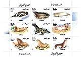 Vita e la natura Ocean collezionismo - foglietto di 9 francobolli di foche e trichechi - Vita Polar - 1999 / Somalia / MNH - Stampbank - amazon.it
