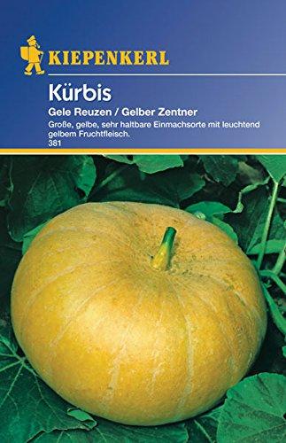 Sperli Gemüsesamen Kürbis Gele Reuzen (Gelber Zentner), grün