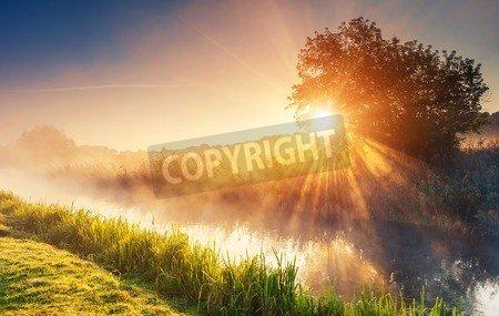 "Leinwand-Bild 30 x 20 cm: ""Fantastic foggy river with fresh green grass in the sunlight. Sun beams through tree. Dramatic colorful scenery. Seret river, Te"", Bild auf Leinwand"