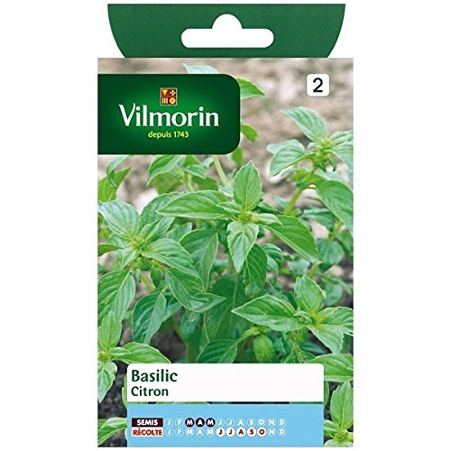 Vilmorin - Sachet graines Basilic Citron