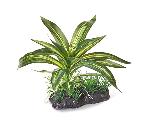 Pistachio Pet – Hermosa Planta Acuario 10 cm Base