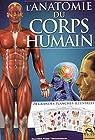 L'anatomie du corps humain - 24 grandes planches illustrées.