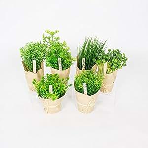 Set d 39 herbes aromatiques artificielles 6 pi ces 12 21 cm for Plante aromatique cuisine