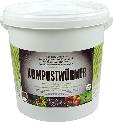 KOMPOSTWÜRMER - Kompost-Starter Regenwürmer - Eisenia Kompostwurm lebend aktiv - Würmer für Garten & Kompostierung Kompost Komposter Wurmkomposter Wurmkiste Wurmfarm Komposttoilette, Anzahl/ Variante:250 Stück in BigBox