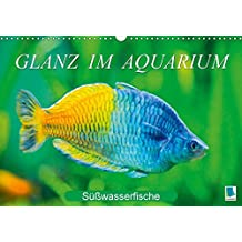 Glanz im Aquarium: Süßwasserfische (Wandkalender 2018 DIN A3 quer): Aquarium: Prachtregenbogenfisch, Marmorskalar & Co. (Monatskalender, 14 Seiten ) ... [Kalender] [Apr 01, 2017] CALVENDO, k.A.