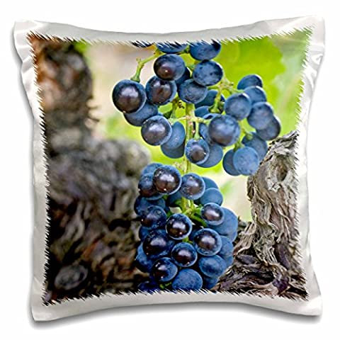 Danita Delimont - Vineyards - USA, WA, Yakima Valley, Syrah Grape vineyard - US48 RTI0231 - Rob Tilley - 16x16 inch Pillow Case (pc_96774_1)