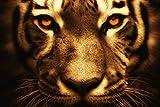 hansepuzzle 35321 Tierwelt - Tiger, 2000 Teile in hochwertiger Kartonbox, Puzzle-Teile in wiederverschliessbarem Beutel