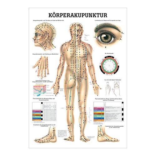Akupunkturtafel (Lehrtafel)
