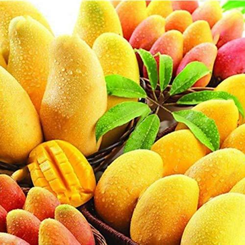 Tomasa Samenhaus- Bio Mango Baum Hausgarten Obst Samen Mehrjährige Mango Seeds Bonsai Pflanzensamen Garten Obst