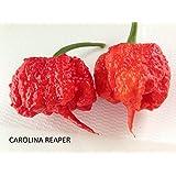 SEMILLAS CAROLINA REAPER HP22B-BIG MAMA MUSTARD-BHUT JOLOKIA RED