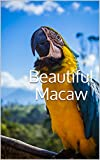 #4: Beautiful Macaw: Photobook of variety macaws around the world (photobook birds 1)