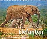 Elefanten - Kalender 2019