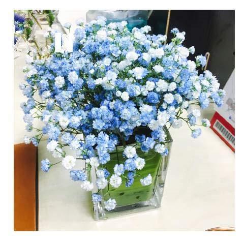 Bloom Green Co. 50 pcs/paquet Lobelia Regatta blanc Trailing vivace gypsophile Garden Bonsai: 12