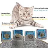Sage Square Natural Cat Litter Refill Bentonite Scoopable Clumping Clay Balls Shape