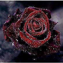 Suchergebnis Auf Amazonde Für Malen Nach Zahlen Rose Mit Prime