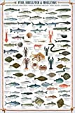 Educational Shellfish & Mollusks - Fische Fische Krusten und Weichtiere Bildung Lernposter Druck + 1 Ü-Poster der Grösse 61x91,5cm