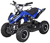 Actionbikes Motors Mini Elektro Kinder Racer 800 Watt ATV Pocket Quad Kinderquad Kinderfahrzeug... (Blau/Schwarz)