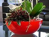 Pflanzschale SANTO Ø55x19 cm aus Fiberglas in Hochglanz rot
