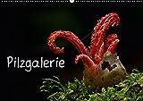 Pilzgalerie (Wandkalender 2018 DIN A2 quer): Faszinierende Pilzaufnahmen (Monatskalender, 14 Seiten ) (CALVENDO Natur) [Kalen