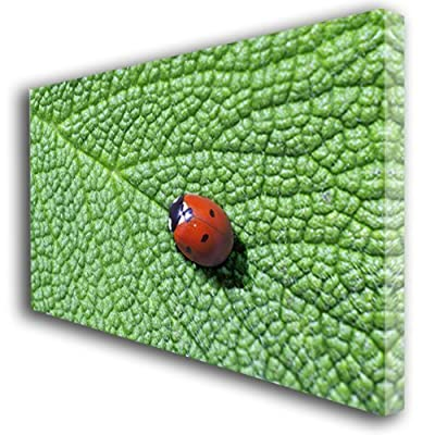 Ladybird canvas wall art large 347 produced by Box Prints - quick delivery from UK.