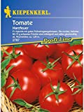 Tomaten Harzfeuer