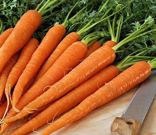 PLAT FIRM Germination Les graines: 50 - Graines: - pastillées Tendersweet carotte Semences - - WOW !! Granulé Ce sont Sooooo bon !!!!