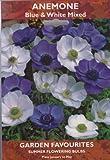 Anemone - Blue & White Mixed - Summer Flowering Bulbs
