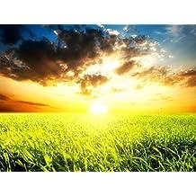 Sun light (English Edition)