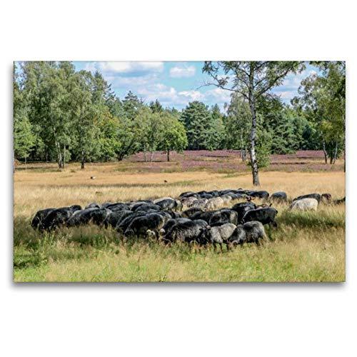 Premium Textil-Leinwand 120 cm x 80 cm quer, Heidschnucken Herde | Wandbild, Bild auf Keilrahmen, Fertigbild auf echter Leinwand, Leinwanddruck: In der Lüneburger Heide (CALVENDO Orte)