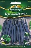 Topf-Buschbohne, Amethyst NEU