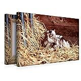 Premium Textil-Leinwand 45 x 30 cm Quer-Format Schafe und Lämmer   Wandbild, HD-Bild auf Keilrahmen, Fertigbild auf hochwertigem Vlies, Leinwanddruck von Hermann Greiling