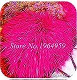 Pinkdose 100 Teile/beutel Bunte Schwingel Gras Bonsai Indoor Garden Festuca Mehrjährige Winterharte Zierpflanzen Einfach Wachsen Bonsai Sementes: 3