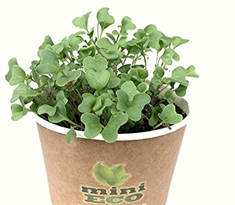 Broccoli Microgreens Grow Kit. Approximately 1200 seeds, 4g. Organic Seeds Sprouting Growing Set. Plant Planter Set Herbs Vegetables