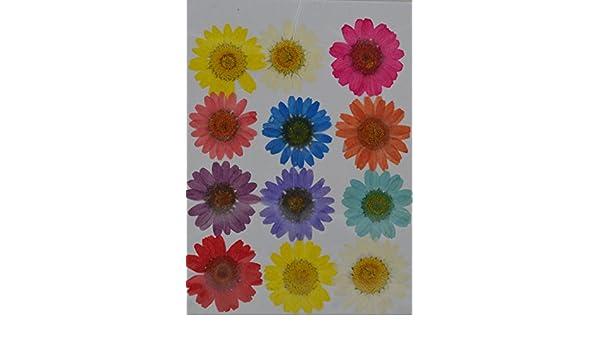 handi-kafu violett Larkspur echten gepressten Getrocknete Blumen