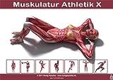 Anatomie Poster - Muskulatur Athletik X - DIN A3