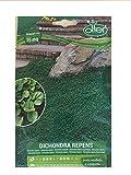 Prato Dichondra Repens sementi per 15 mq morbido e compatto 100 gr semi giardino