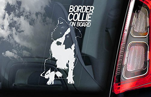 border-collie-car-window-sticker-dog-sign-internal-reverse-printed-v01