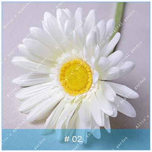 geoponics semi: zlking 100 pz gerbera varietà di colori bonsaïpianta famiglia flower garden facile da coltivare regalo bellissimo: 2