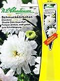 Schmuckkörbchen 'Double Click Snow Puff' Pompom-ähnlich, weiß, gefüllt, gute Schnitteignung 'Cosmos bibinnatus' Cosmea