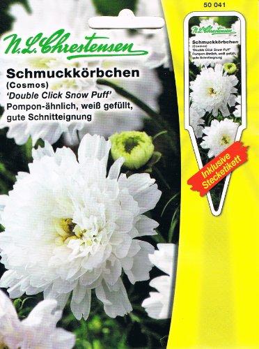 Schmuckkörbchen 'Double Click Snow Puff' Pompom-ähnlich, weiß, gefüllt, gute Schnitteignung 'Cosmos bibinnatus' Cosmea - Kraut Puffs