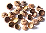 25 Stück Natur Eichel Hütchen Kappen von einer Roteiche Herbst Winter Bastel- und Deko Artikel