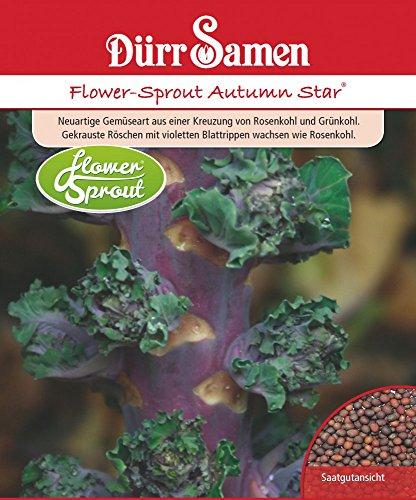 Dürr Samen 4262 Kohl Flower-Sprouts Autumn Star (Kohlsamen)