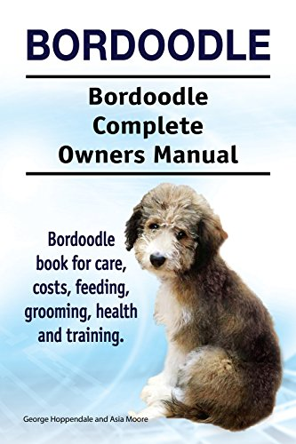 Bordoodle Dog Bordoodle Dog Book For Costs Care Feeding Grooming