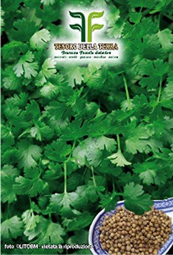 ❦ 100 C.ca semillas de cilantro - Coriandrum Sativum en paquete original hecho en Italia