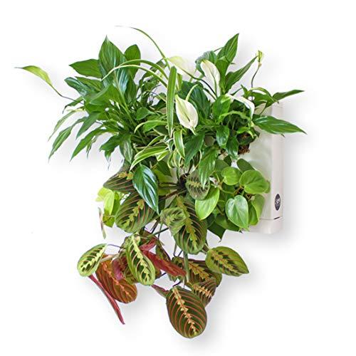 Ortisgreen HOH! de, Tableau Végétal Mural, Pot pour Plantes Mural a...