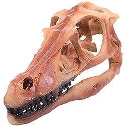 Dinosaurio Hadrosaurio Resina Fósil Del Cráneo De La Enseñanza De La Decoración Del Acuario Esqueleto