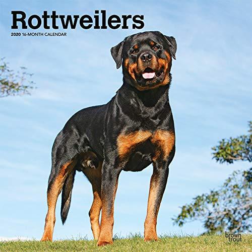 Rottweilers - Rottweiler 2020 - 16-Monatskalender mit freier DogDays-App: Original BrownTrout-Kalender [Mehrsprachig] [Kalender] (Wall-Kalender)
