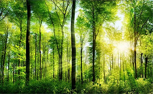 Fototapete 3D Effekt Wald Tapete Sonnenschein Greenwood Landschaft Vliestapete 3D Tapeten Wanddeko Wandbilder Wohnzimmer Greenwood Wallpaper